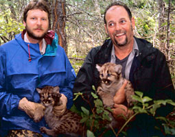Don Katnik and Bob Wielgus with cougar kittens.