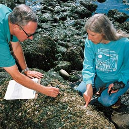 Volunteers Fletcher Davis and Cheryl Bradkin attempt to add a species to the list that Beach Watchers have developed for Island County beaches. (c) Laurence Chen