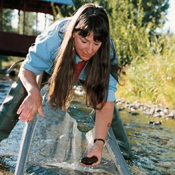 Carolyn Blake checks for caddisfly larvae, indicators of stream quality. Blake coordinates the Cooperative Extension Water Education and Training through 4-H, Ferry County schools, and other children's programs. Robert Hubner