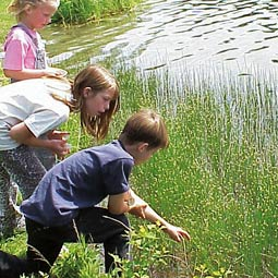 Ferry County 4-H campers study community habitats and niches.