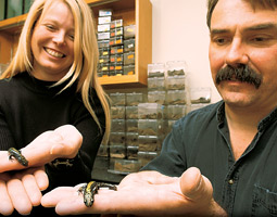 Cynthia Gill and Paul Verrell with long-toed salamanders. Because their skin is permeable and they are predators, salamanders are particularly vulnerable to environmental chemicals. By Robert Hubner