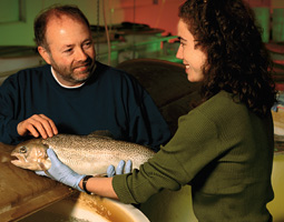 Does appearance always reflect the genes? Not in salmon. Gary Thorgaard found that 84 percent of the Hanford Reach chinook that were functioning as females were actually males. by Chris Mather