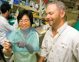 Kwan Hee Kim and Michael Skinner study the development of the male reproductive system and the production of sperm in rodents. Rodents protect themselves from toxins in much the same way as humans do. Robert Hubner