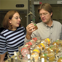 Graduate student Catherine Albaugh examines Soap Lake extremophile cultures with Professor Brent Peyton in the laboratory.