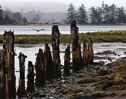 Willapa Bay's advocates fend off invasions.