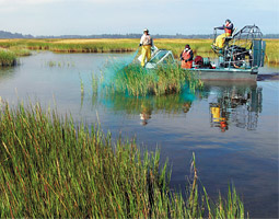 An airboat crew moves along the bay-side edges of the tall <em>Spartina</em> meadows that are taking over parts of the south end of Willapa Bay.