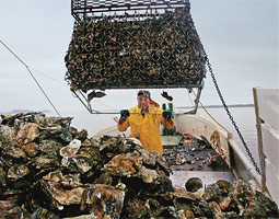 'Oyster growers have always been environmentalists to a point. We have to be, because we need clean water.' --John Herrold.