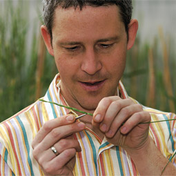 Postdoctoral researcher Doug Lammer pulls the anthers out of a head of wheatgrass, a perennial wild-wheat relative, thereby emasculating it and preparing it to hybridize with annual wheat.