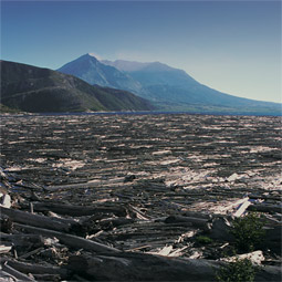 The massive landslide that triggered the 1980 eruption swept into Spirit Lake, raising its elevation by 60 meters. Trees mowed off by the following lateral blast still cover the surface of the lake.