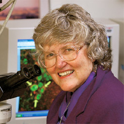 Lynn Churchill uses fluorescence microscopy to see which brain cells make sleep-related chemicals such as TNF.