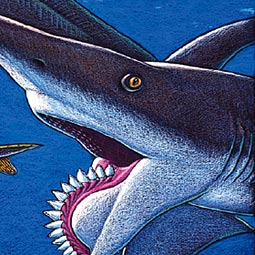<em>Helicoprion</em> (2000), colored pencil on paper. Troll is the first artist to render a believable illustration of what this long-extinct whorl-toothed shark might have looked like.