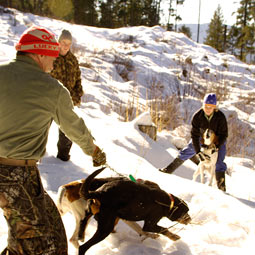 Eager to hit the trail, houndsman Tom MacArthur and his hounds approach fresh cougar tracks, as Cooley restrains her dog, Emma.