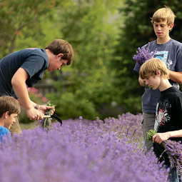 Hanna hires local youths to help with the harvest in July.