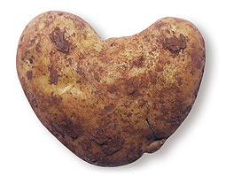 Potato. <em>Michael Hopkinsii</em>