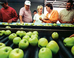Murray on a 2001 tour of an apple packing house in Yakima. In February she was recognized by the Washington State Farm Bureau for her work on behalf of Washington State farmers. <em>Courtesy Murray Senate press office.</em>