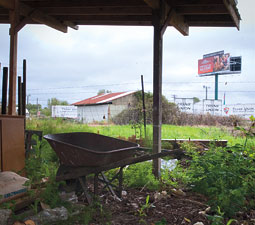 A view from Terry's Berries, Dick '65 and Terry Carkner's farm in Tacoma. Photo by Zach Mazur '06