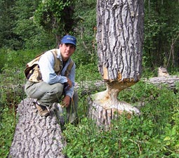 Steve Bondi by a tree chewed by beavers. Courtesy Steve Bondi.