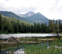 Beaver dam at Black Pine Lake with Hoodoo Peak in the distance. By Kira Gunderson