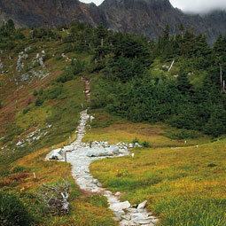 Cascade Pass is relatively lush today, likely indicating warming. By Zach Mazur.