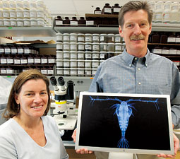 Biologists Gretchen Rollwagen-Bollens and Steve Bollens study plankton in their WSU Vancouver lab. By Bill Wagner.