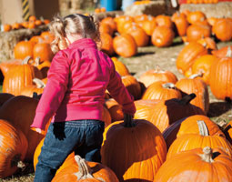 A Pumpkin Land visitor at Beck&rsquo;s Harvest House in Green Bluff. <em>Tim Bresnahan</em>