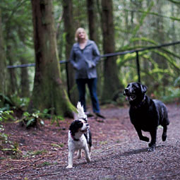 While Roxie and a Labrador friend roam free in an off leash park, her owner Sara Ninteman enjoys fresh air and a walk in the woods. <em>Ingrid Barrentine</em>