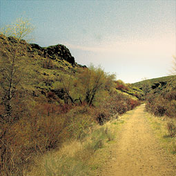 Cowiche Canyon, a Rails to Trails site, is a beautiful remnant of shrub-steppe habitat. <em>Staff photo</em>