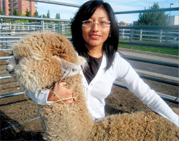 With a veterinary master's degree in hand, Yessenia Picha returns to her country, where 80 percent of the world's alpacas reside. <em>Mushtaq Memon</em>