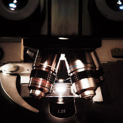 Light microscope. <em>Robert Hubner</em>