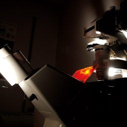 Confocal microscope. <em>Robert Hubner</em>
