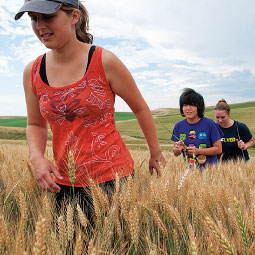 Arlington engineering junior Laurel Graves (far left) and other student researchers help compile reams of data to gauge a wheat crop&rsquo;s role in climate change. <em>Zach Mazur</em>