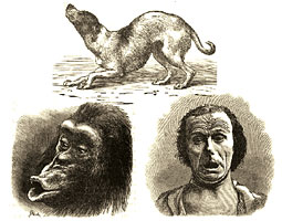 The biology of emotions has intrigued scientists back to Charles Darwin, author of The Expression of Emotion in Man and Animals, which featured these illustrations.