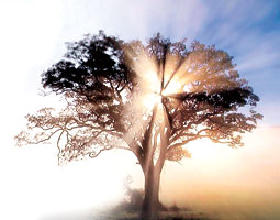 Tree in sunlight. <em>Staff photoillustration/Wikimedia</em>