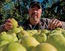 Ray Schmitten's family has played a major role in the delicious relationship between the Anjou pear and the Wenatchee River Valley. <em>Photo Zach Mazur</em>