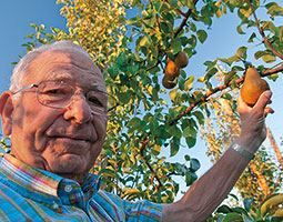 Although many think of the Bartlett as defining pear taste, Chuck Peters is adamant that Washington needs some new pear varieties. <em>Photo Zach Mazur</em>