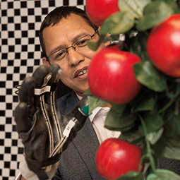 Manoj Karkee works with a sensory glove to study how robotics could pick some of the 17 billion apples harvested in Washington state annually. <em>Photo Robert Hubner</em>