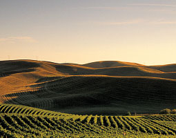 Fields near Walla Walla. <em>Photo Greg Vaughn</em>