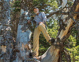 Jesse Logan &#8217;77 PhD, a former U.S. Forest Service entomologist, predicted in the 1990s that the devastation on whitebark pine by beetles would increase with the temperature. <em>Photo Bruce Andre</em>