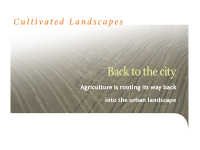 Back to the City: Agriculture is rooting its way back into the urban landscape