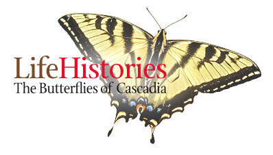 Life Histories: The Butterflies of Cascadia