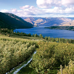 Ray Fuller's family orchard above Lake Chelan.
