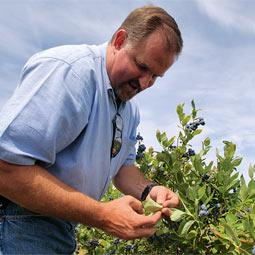 Greg McKay'86 joined Sakuma Brothers as its organic crop manager last year.