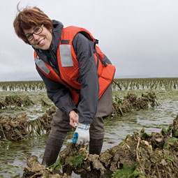 Coast Seafoods CFO Kay Cogan '79 visits oyster beds frequently in Willapa Bay. Coast is the largest oyster producer in the country.