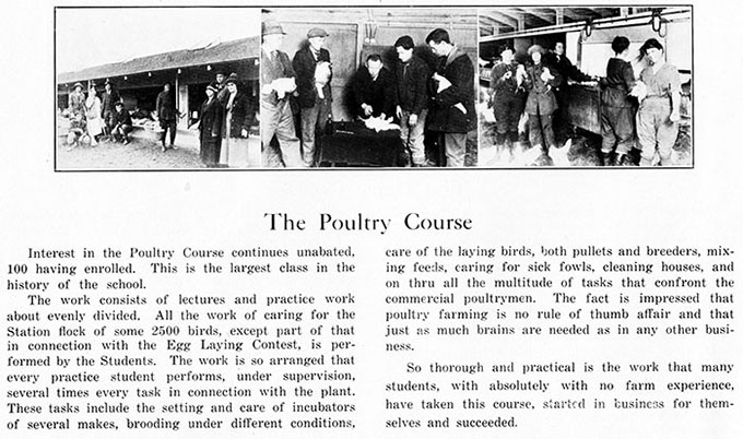 Description of the poultry course in the 1922 annual